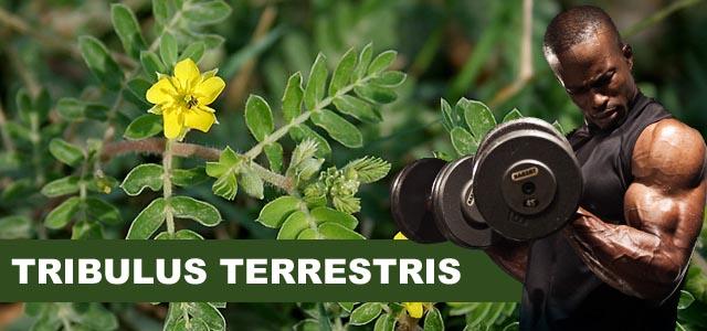 GymBeam Tribulus Terrestris 120 tabliet Fit Life doplnky výživy pre športovcov